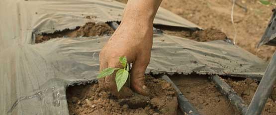 L'agriculture bio française n'arrive pas à répondre à la demande
