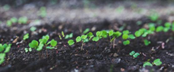 L'agroécologie pourrait nourrir tous les Européens d'ici 2050