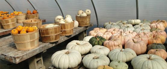 L'agriculture bio est plus rentable que le conventionnel, selon l'INSEE