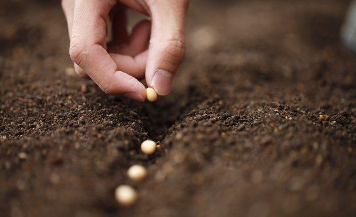Échangeons graines pour préserver la biodiversité