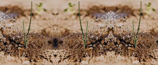 Sécheresse : et si les eaux usées étaient la solution ?