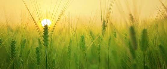 Coronavirus - la Région Occitanie soutien l'agriculture régionale