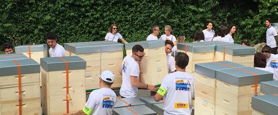 Pernod Ricard met ses salariés au service des abeilles