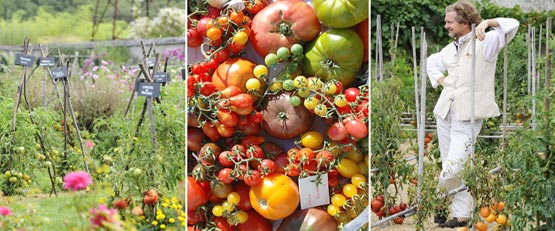 Dans son potager, le prince jardinier cultive 700 variétés de tomates pour favoriser la diversité