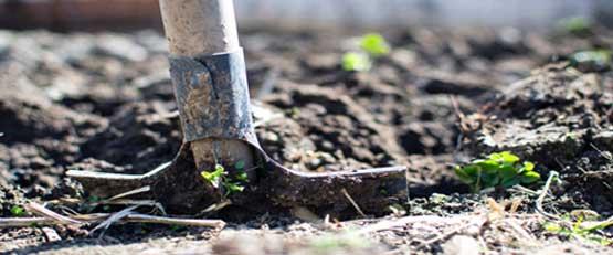 Les surfaces bio multipliées par 3 en 10 ans en France