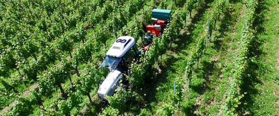 Notre veille vin vignes vignerons - Traitement de la vigne ...