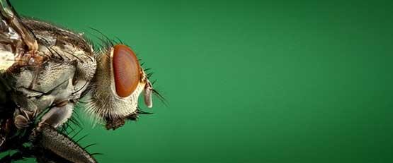 Les insectes tueurs : l'avenir de l'agriculture bio