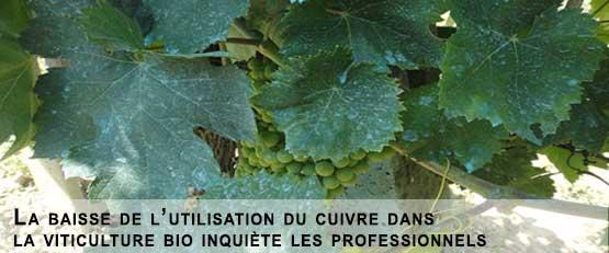 La baisse de l'utilisation du cuivre dans la viticulture bio inquiète les professionnels