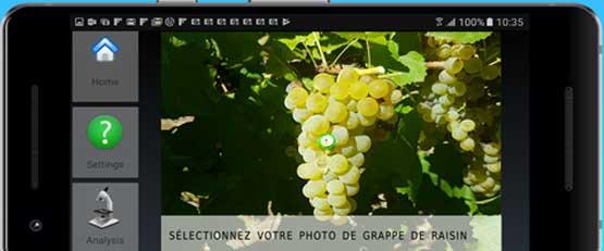 WineOz, l'application qui mesure la couleur et le diamètre du raisin