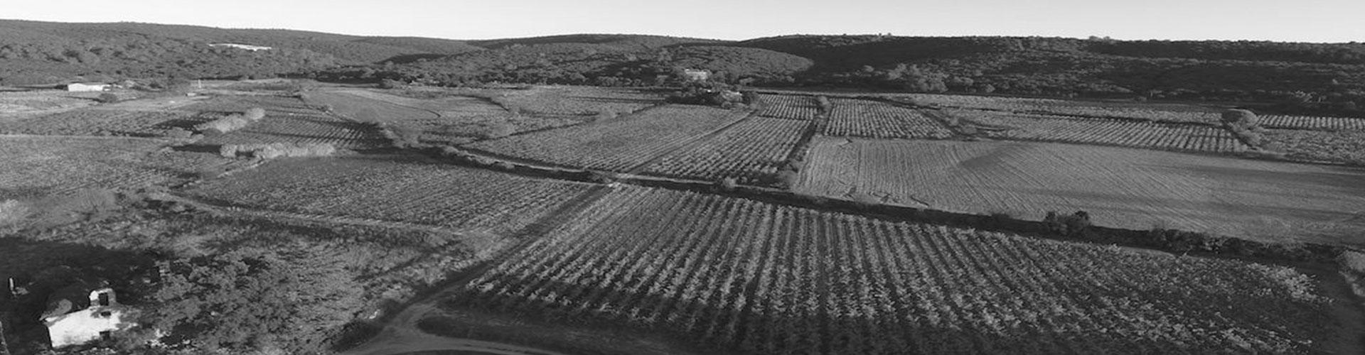 Domaine Cap d'Aniel, AOP Terrasses du Larzac, IGP Saint Guilhem le Désert Gignac Hérault