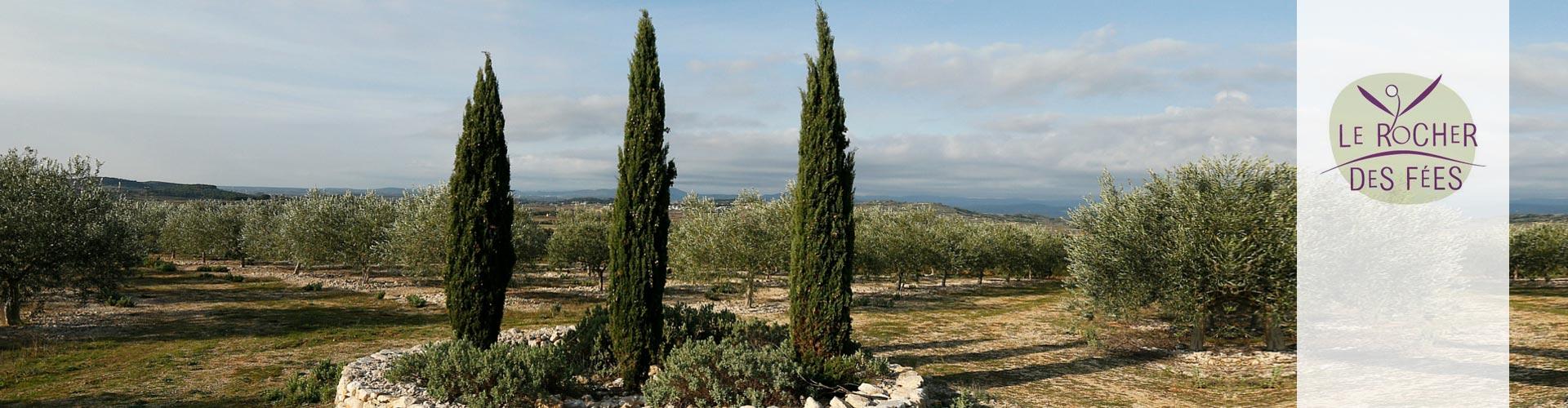 Le Rocher des Fées, huile d'olives et raisin de table à Vendémian en Coeur d'Hérault