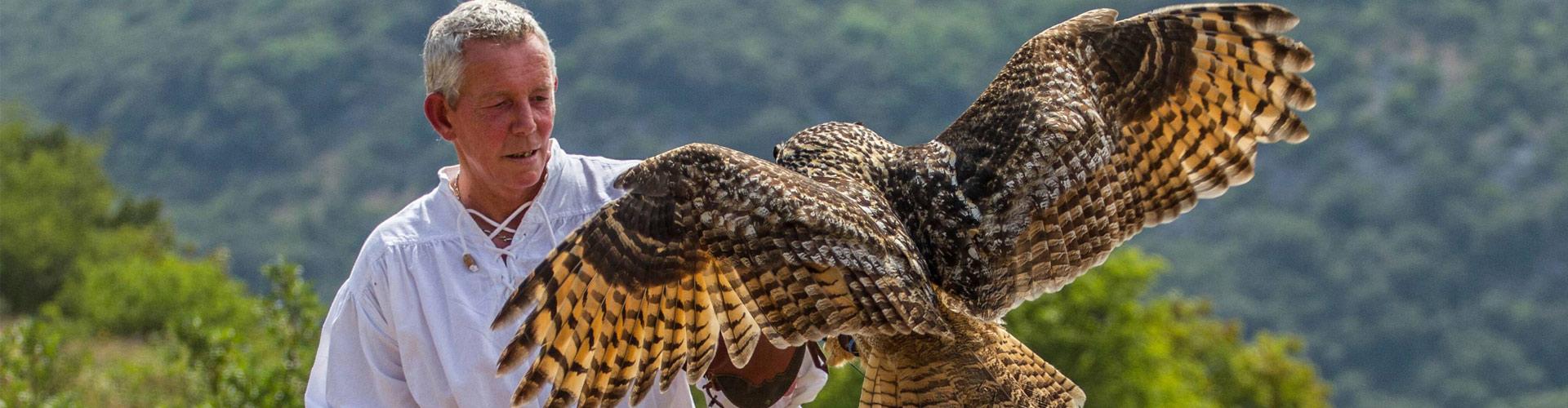 Les ailes du Larzac Spectacle de Fauconnerie