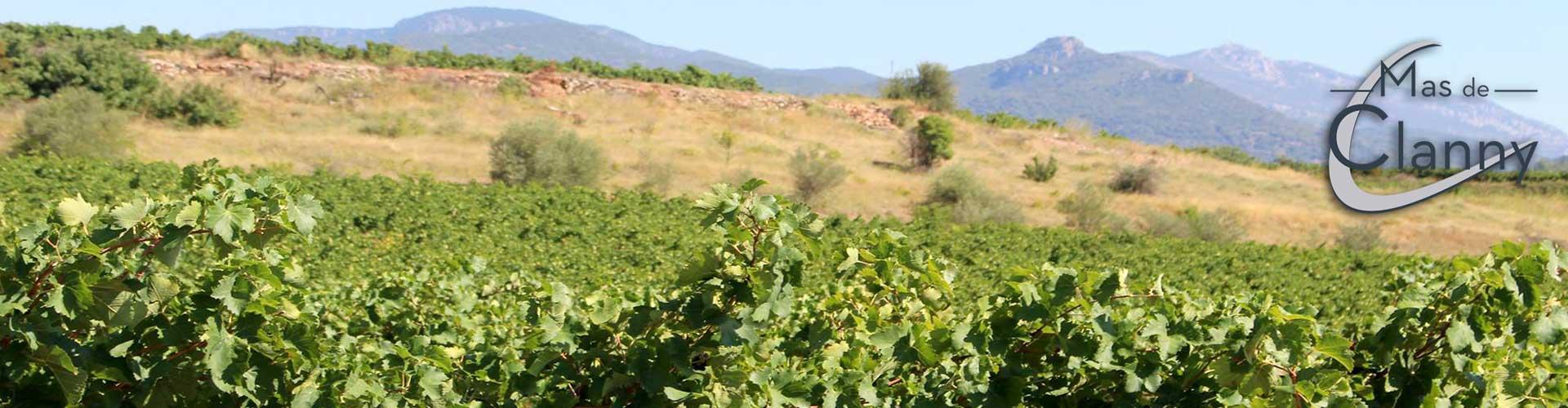 Mas de Clanny, vin bio à Saint Félix de Lodez en Coeur d'Hérault