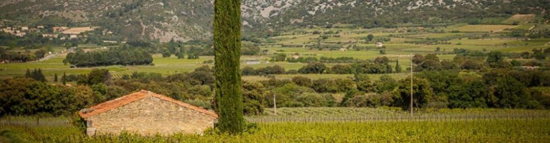 Mas de Seranne à Aniane en Coeur d'Hérault