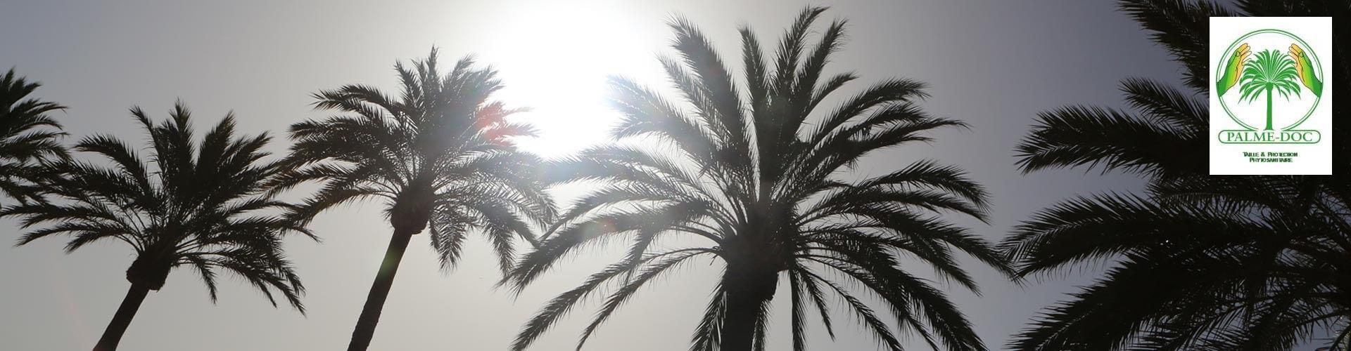 Palmed'OC traitement des palmiers à Saint André de Sangonis