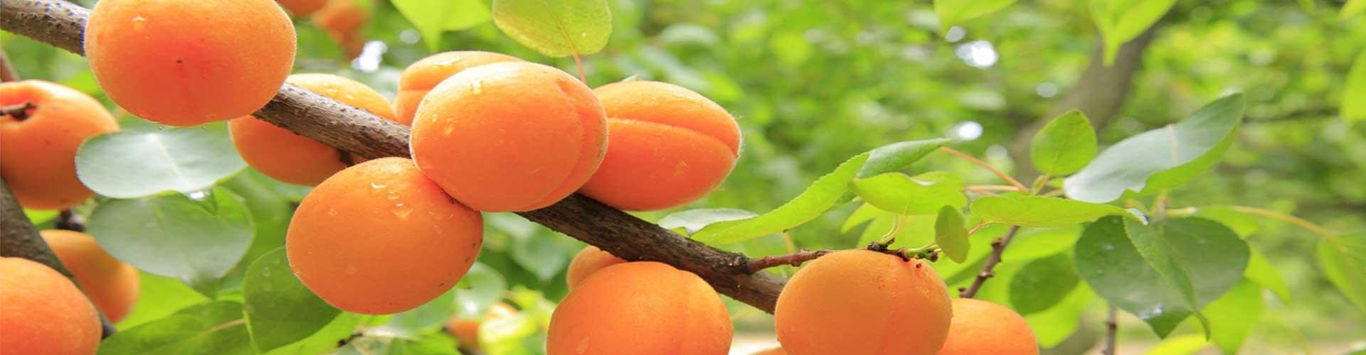 EARL Terres et Fruits, producteur de fruits et légumes à Canet dans l'Hérault. Vente directe de fruits et légumes