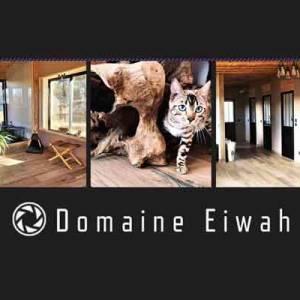 Pension Chat Luxe Domaine Eiwah en Coeur d'Hérault