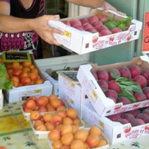 EARL Terres et Fruits, producteur de fruits et légumes à Canet dans l'Hérault. Vente directe du producteur au consommateur.
