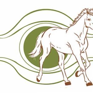 Equitation et Ethologie à Le Bosc