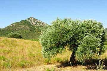 Les entreprises du Coeur d'Hérault dans la catégorie environnement et espaces verts