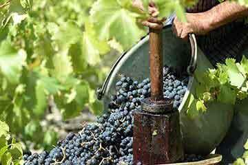Les entreprises du Coeur d'Hérault dans la catégorie vin et alcool