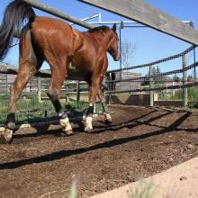 Buxor, application equestre