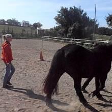 Equitation et Ethologie en Coeur d'Hérault