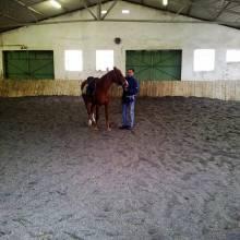 Equitation et Ethologie à Soumont dans l'Hérault