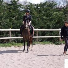 Equitation et Ethologie, obtenir une meilleure connexion avec son cheval