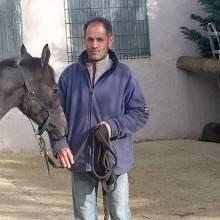 Equitation et Ethologie, Accompagement cheval - cavalier