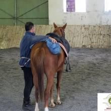 Equitation et Ethologie, mieux connaitre son cheval