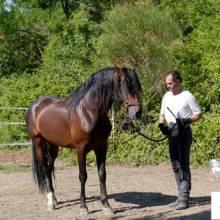 Equitation et Ethologie, se connecter et développer son potentiel avec l'aide du cheval