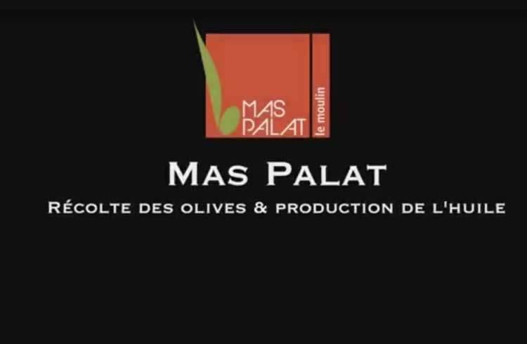 La récolte des olives au Mas de Palat