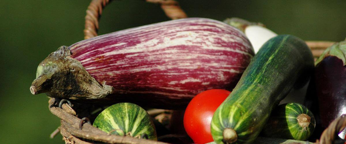 Formation à l'éducation au goût en Coeur d'Hérault