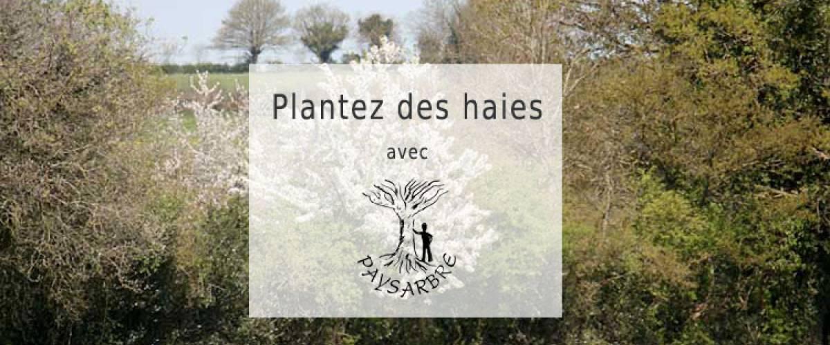 HERAULT'HAIES, en 2019 Paysarbre accompagne la plantation et la restauration de haies champêtres