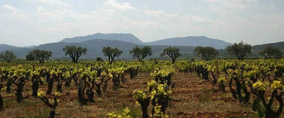 """Projet """"Trajectoires"""" en Cœur d'Héraultn dans le cadre du contrat local de santé du Pays Coeur d'Hérault"""